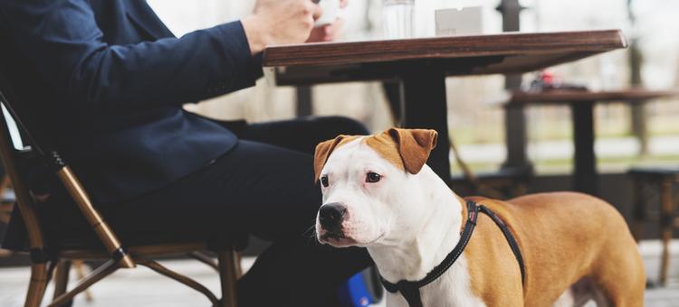 dog friendly restaurant ideas