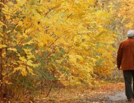 fall activities for seniors