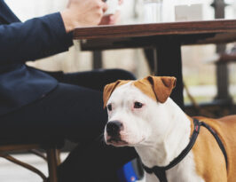 dog friendly restaurant ideas